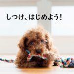 犬のしつけはいつ、何をすればいい?初心者でも安心のしつけ方ガイド
