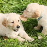 しつけは子犬のうちがオススメ!1歳までのしつけが大切な3つの理由