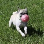 トイレやおもちゃ…子犬との暮らしで最初に揃えたいグッズ7種とは?