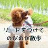 リードを使って愛犬と散歩を思い切り楽しむコツを解説!
