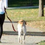 リードは犬との散歩の必須アイテム!〇〇〇を意識して安全・快適に楽しもう♪