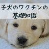 子犬の混合ワクチンについてのまとめ。時期と回数を守って効果を確実に!【獣医師監修】