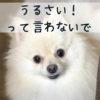 犬が吠える…理由を知って対策すればむやみに吠えない犬になる!