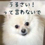 【吠える犬への対策】犬はなぜ吠える?「うるさい!」と言う前に知っておいてほしいこと
