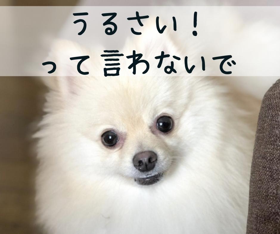 吠える原因のわかっている犬