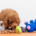 子犬の甘噛み対策。愛犬なりの理由を知って解決しよう!
