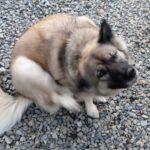 【原因リスト】犬が痒がるのは病気のせい?理由と対処法まとめ