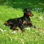 【犬に優しいブラッシング】成功のための3つの秘訣と基本の方法