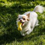 犬が喜ぶおもちゃの遊び方!遊び上手な飼い主はココが違う!