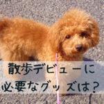 子犬との散歩のためのグッズ5選、そのチェックポイントとは?
