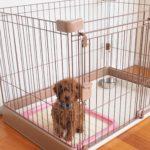 子犬のトイレトレーニングの方法は?5ステップで完璧習得【初心者さん必見】