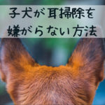 耳掃除で子犬と格闘しないため…早い時期からしておきたいコトとは?!【NG例も紹介!】