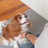 【自宅で練習】子犬がいつでも「待て」ができるようになるしつけ方とは?