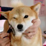 「そこは嫌…!」ブラッシングを嫌がる犬、苦手部位の克服方法とは?