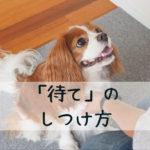 【子犬のしつけ】いつでも「待て」ができるようになる4STEPとは?