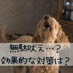 【無駄吠え】子犬に優しく、効果的な対策とは?