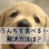 犬がうんちを食べる…原因は?やめさせる方法はある?