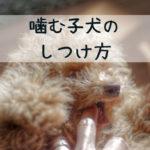 子犬が噛む…3つの理由としつけ方