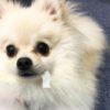 犬の散歩中の拾い食いを防ぐしつけ。NG例と正しい方法
