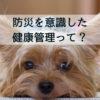 愛犬との防災。非常時への準備としての健康管理、4つのポイント
