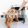 犬にハウスのしつけは絶対必要!ハウスが役立つ場面としつけの方法とは?