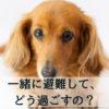 【災害への備え】愛犬と避難した時の実際の過ごし方とは?<避難所の事例も紹介>