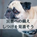 非常時でも確実に!災害への準備としての犬のしつけ5選