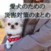 災害から愛犬を守る。飼い主ができる対策のまとめ