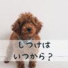 子犬のしつけ、いつからはじめる?基本的な考え方を解説!