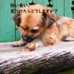 犬が拾い食いをした時のNG行為ととるべき対応とは?【獣医師監修】