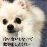 犬の散歩。拾い食いを防ぐしつけのNG例と正しい方法