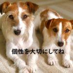 【多頭飼い】新しく迎えた子犬のしつけのコツとは?
