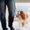 散歩中に犬が引っ張る…やりがちなNG対処法とオススメ対処法