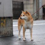 地震対策、リードはいつもの…はダメ!その理由と、本当に必要な愛犬の防災グッズとは?