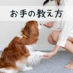 犬の「お手」の教え方。うまくいかない時にはココを見直そう。