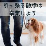 散歩で犬がぐいぐい引っ張る…そんな時のNG行為とオススメ対処法は?