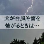 台風、集中豪雨、雷…怖がる犬を安心させてくれる2つのアイテムとは?
