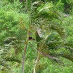 【怖がる時にも】台風への対策として必須の犬のしつけとは?