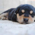 子犬が下痢をした…病院へ行ったほうがいい?【獣医師監修】