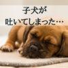 子犬が吐く…早くよくなるために知っておきたい「観察と対応のポイント」とは?【獣医師監修】