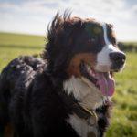 犬のフィラリア症、いつまで予防薬を飲ませればいいの?【獣医師監修】