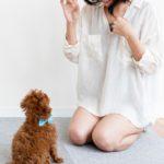 犬のおすわりの教え方。確実にマスターするための4STEP