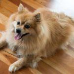愛犬のダイエット成功のために実践するべき5つのこと【獣医師監修】
