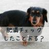 犬の肥満チェック法。「肥満かも?」と思った時にするべきことは?【獣医師監修】