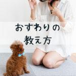 【犬のおすわりの教え方】完全マスターには「しあげのステップ」が超重要!