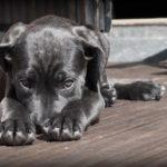 犬がおしっこを失敗。やりがちな「4つのNG行為」と、とるべき「たった1つの行動」は?