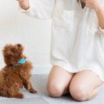 子犬の「おすわり」3つの疑問。なぜ大切?いつからはじめる?いつまでにマスターすればいい?