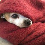 冬を愛犬と快適に♪知っておくべき7項目とは?