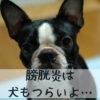 膀胱炎になった犬のためにしてあげたい5つのこと【獣医師監修】