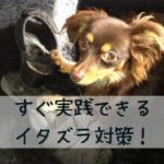【犬のいたずら】「無視」以外にも必要な対策が!今すぐできる3つのコトとは?